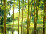 Bamboo with a natural background 02