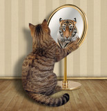 The cat looks at his reflection in the mirror. It sees a tiger there. - 194554249