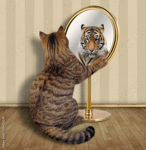 Fotobehang Kat The cat looks at his reflection in the mirror. It sees a tiger there.