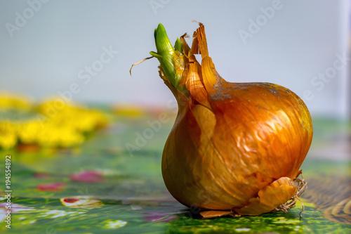 Leinwanddruck Bild Frueh Jahr Blume Zwiebel Tulpe im Garten