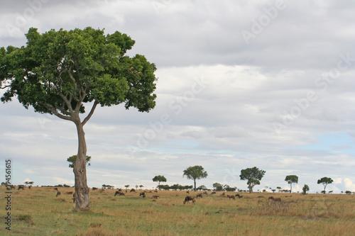 Keuken foto achterwand Baobab wilde lebende Tiere (Gnu, Antilope, Zebra) in der Savanne in Afrika