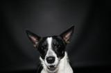 Funny dog face portrait at studio - 194577838