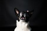 Funny dog face portrait at studio - 194578035