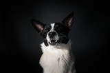Funny dog face portrait at studio - 194578415