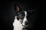 Funny dog face portrait at studio - 194578453