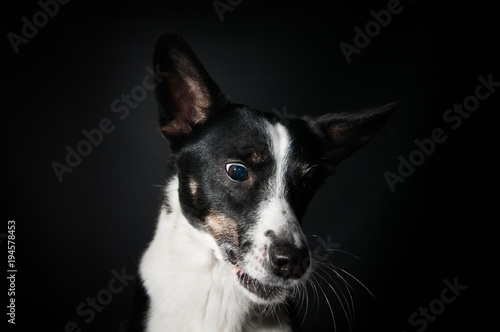 Funny dog face portrait at studio