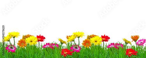 Foto Spatwand Gerbera Frühjahr Blumenranke Freisteller