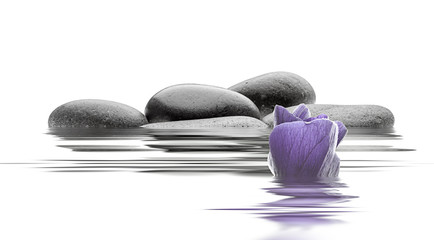 spa de piedras flor y agua en fondo blanco