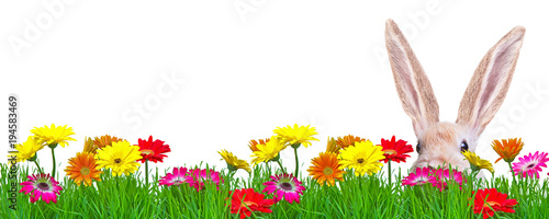 Fotobehang Gerbera springflower background