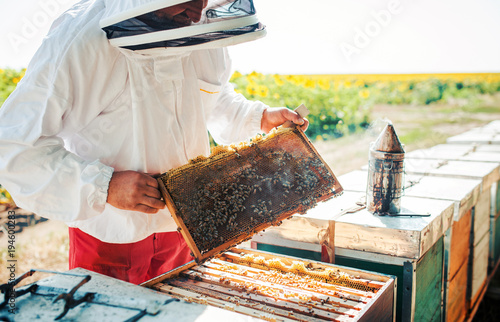 Fototapeta Beekeeper working in apiary
