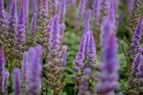 Aluminium Lavendel Montreal