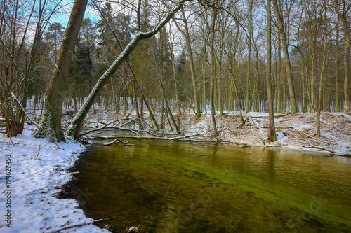 Fotobehang Lente zima w rezerwacie przyrody Las Warmiński