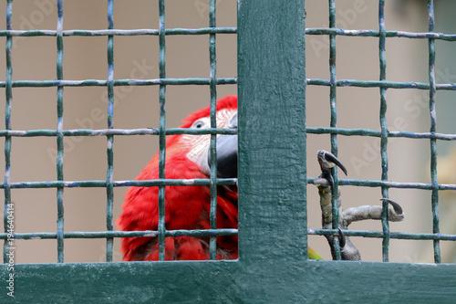 Aluminium Papegaai Red macaw parrot