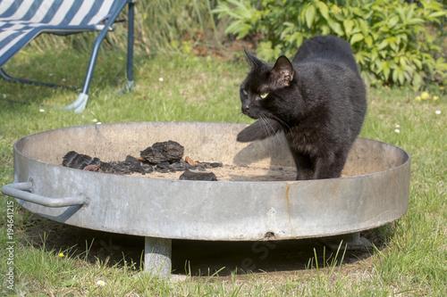 Fotobehang Panter Schwarze Katze auf Grill mit Holzkohle
