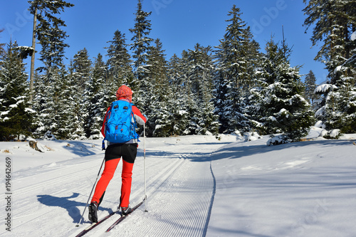 Woman in the colour dress on cross-country skis amongst trees coated with the snow in mountain in Poland
