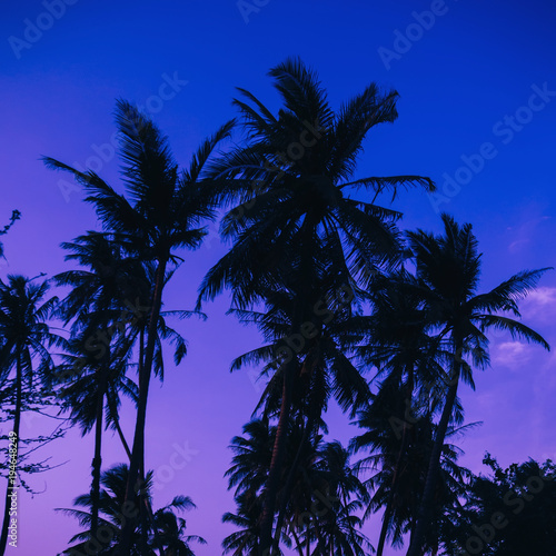Aluminium Donkerblauw silhouettes of palm trees on the background of blue and purple sky in the evening