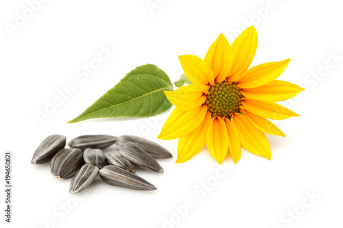 Fototapeta Fresh sunflower and sunflower seeds isolated.