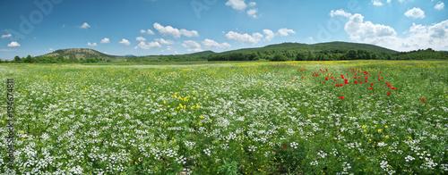 Spring flowers panorama - 194674811