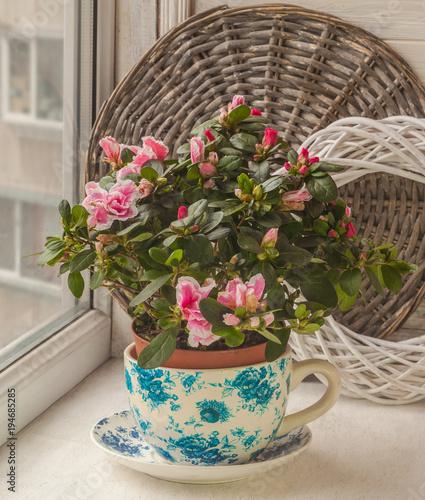 Aluminium Azalea Azalea (rhododendron) in vintage pot