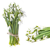 snowdrop flowers on a white background - 194685892