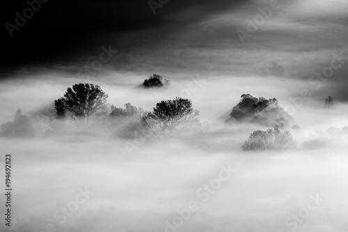 drzewa we mgle - czarno-białe zdjęcie
