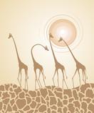 Fototapeta nice giraffes illustration