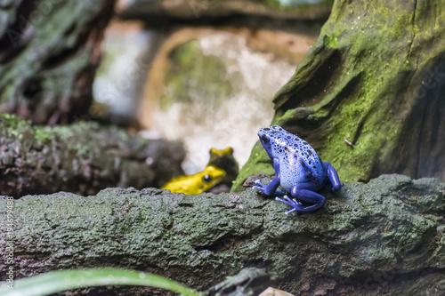Aluminium Kikker Blue Tree Frog.