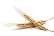 Wheat - 194706446