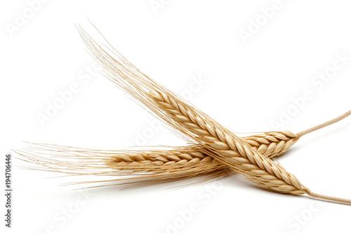 In de dag Gras Wheat