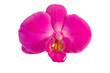 Orchidee isoliert auf weiß