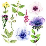 Collection leaves and anemones, illustration isolated on white background. Watercolor style - 194719207
