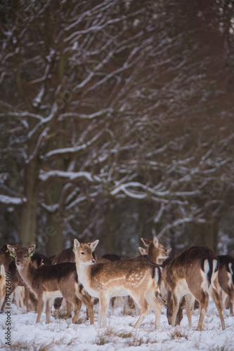 Aluminium Hert Deer in a snowy forest