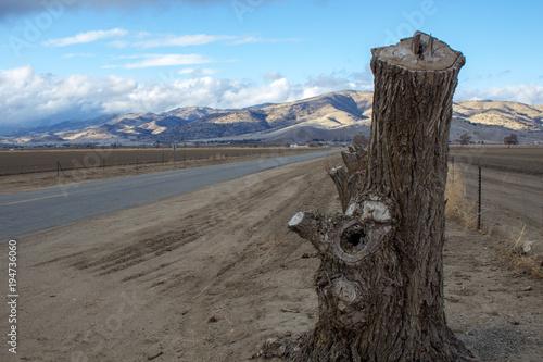 In de dag Blauw Tree stump