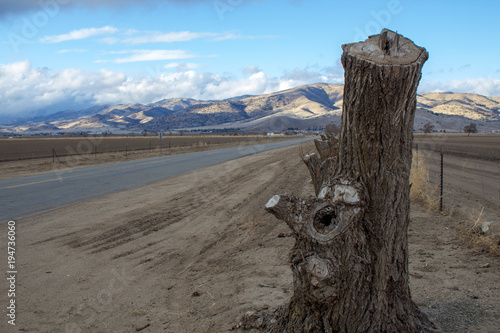 Foto op Canvas Blauw Tree stump