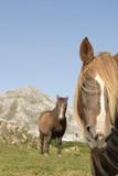 Pareja de caballos con montaña de fondo - 194739606