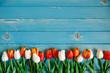 Тюльпаны, выложенные в ряд, на голубом деревянном фоне