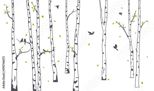 Fototapeta Birch Tree with deer and birds Silhouette Background