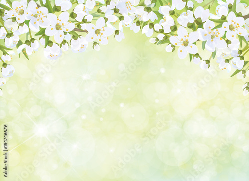 Sticker Vector blossoming branches of apple  tree, spring background.