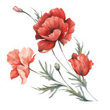 Bouquet with poppies. Hand draw watercolor illustration. - 194747816
