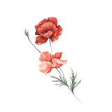 Bouquet with poppies. Hand draw watercolor illustration. - 194747839