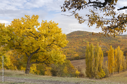 Fotobehang Honing autumn forest