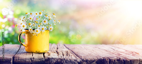 Spring - Chamomile Flowers In Teacup On Wooden Table In Garden