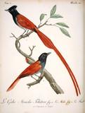 Illustration of a bird. - 194797002