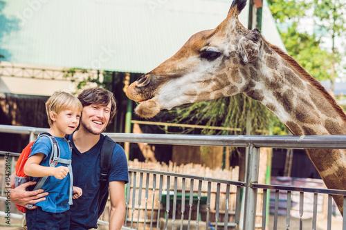 Fototapeta Father and son watching and feeding giraffe in zoo. Happy kid having fun with animals safari park on warm summer day