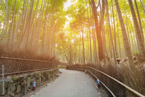 Fotobehang Bamboe Bamboo forest with walking way with sun light natural landscape background