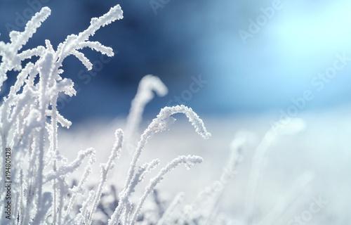 Aluminium Galyna A. Frozen grass