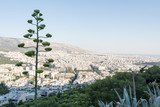 View of Athens from Lycabettus Hill,with Agava in the foreground, Greece - 194802619