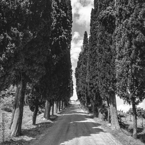 Fotobehang Toscane cypress alley in Tuscany