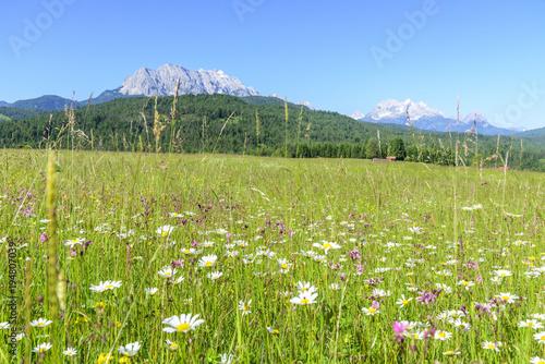 Foto op Canvas Natuur blühende Kräuterwiese in den bayrischen Alpen