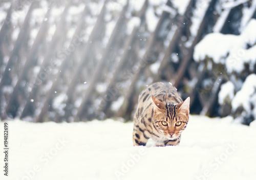 Aluminium Tijger Schnee Tiger